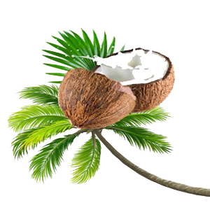 Coconut Chip Product